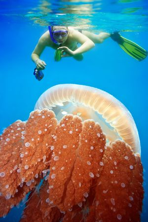 Underwater photographer snorkeling with jellyfish photo