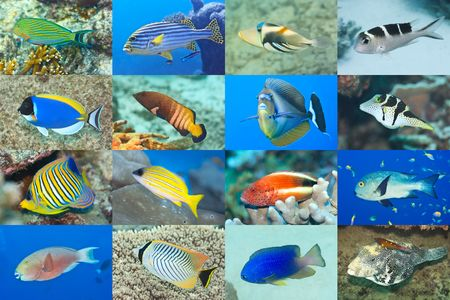Set of 16 tropical fishes close-up. Underwater concept photo