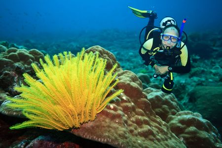 focus on a foreground:  Diver underwater with feather starfish on foreground. Focus on diver