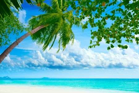Beautiful tropical beach with palmtree on foreground photo