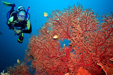 Underwater landscape with scuba diver and gorgonian coral 스톡 콘텐츠