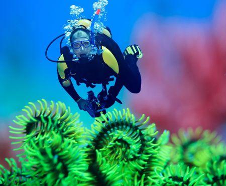 dive: Buzo submarina con plumas starfish en primer plano. Centrarse en el buzo  Foto de archivo