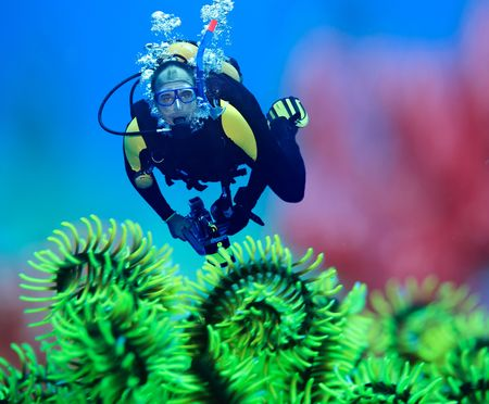 underwater diving: Diver underwater with feather starfish on foreground. Focus on diver Stock Photo