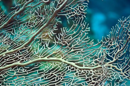 Texture of a beautiful soft coral underwater Stock Photo - 6364026