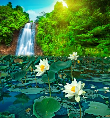 A lot of lotos flowers in a waterfall pool photo