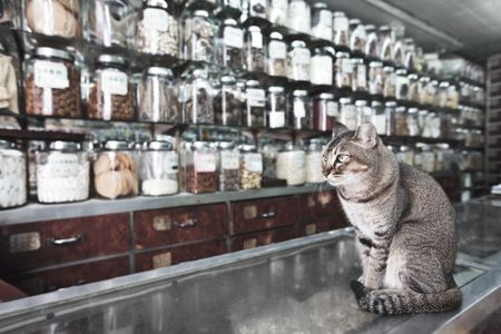 pet store: Cat like a seller in traditional Chinese medicine and dried goods shop