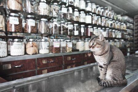 Kat als een verkoper in de traditionele Chinese geneeskunde en droge waren winkel