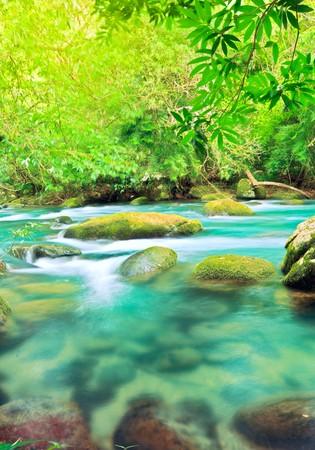 national plant: Blue water stream. Phong Nha - Ke Bang National Park. Vietnam