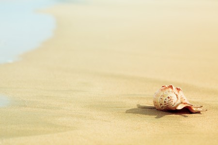 Seashell on the tropical beach close to water photo
