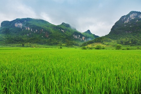 Rice paddy field at the nothern Vietnam photo