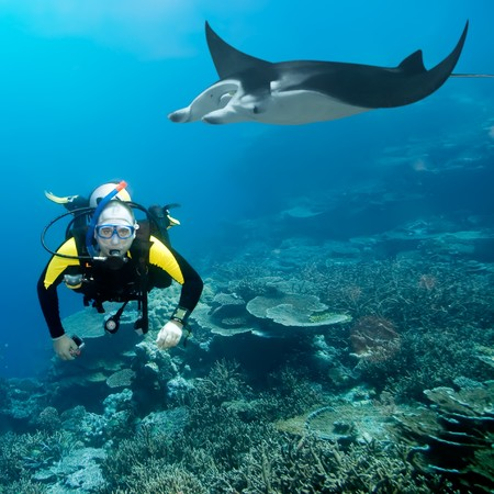 Diver and manta underwater. Coral reef on background photo