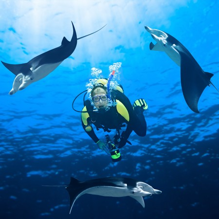 scuba mask: Diver and three manta ray around underwater. Stock Photo