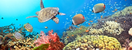 Underwater panorama with turtle, coral reef and fishes Imagens