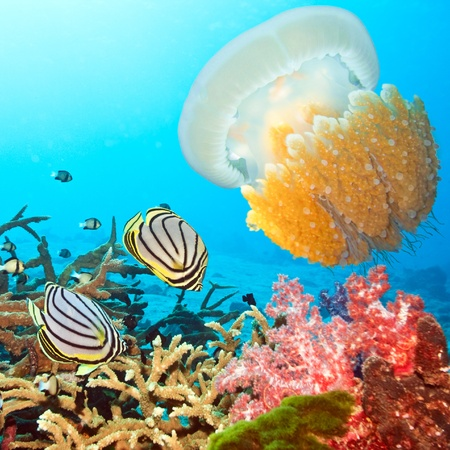 Underwater landscape with couple of  Butterflyfishes and jellyfish Stock Photo