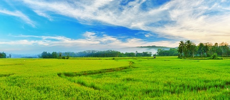 non urban scene: Panorama of the paddy rice field. Philippines Stock Photo