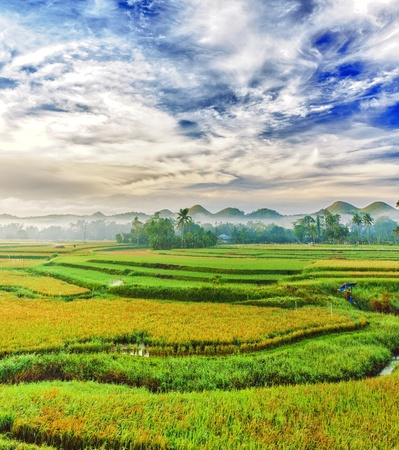 bohol: Panorama of the paddy rice field. Philippines Stock Photo