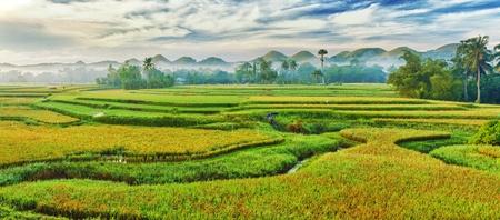 phillipine: Panorama of the paddy rice field. Philippines Stock Photo