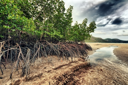con dao: Mangroves. Landscape of Con Dao island. Vietnam  Stock Photo