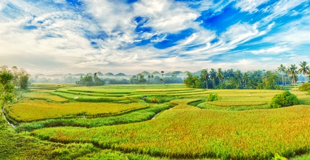 paddy fields: Panorama of the paddy rice field. Philippines Stock Photo