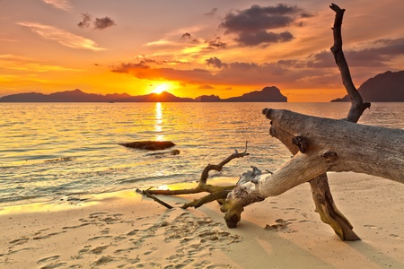 Sunset over the island. Dry tree on the foreground Stock Photo - 9619008