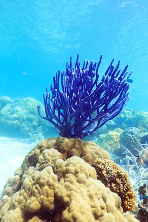 hard coral: Beautiful coral underwater. Water surface on background