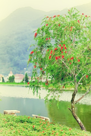 riverside tree: Vintage style landscape with beautiful tree and lake