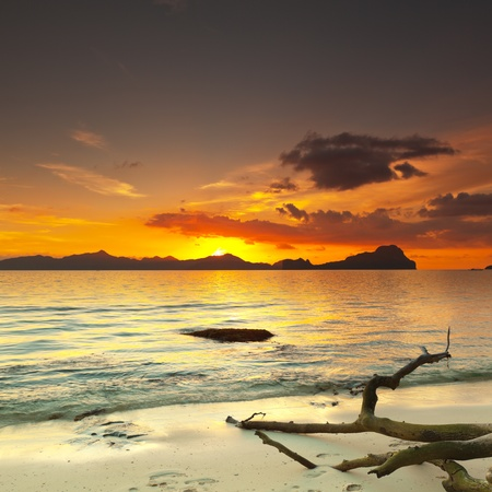 palawan: Sunset over the island. Dry tree on the foreground Stock Photo