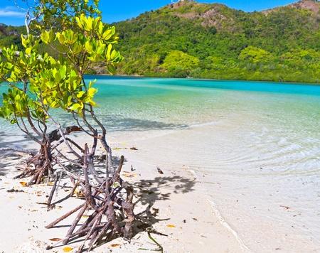 coron: Mangroves tree on the tropical island Snake Stock Photo