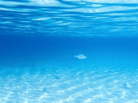 Zandbodem, oppervlakte en vis in het blauw onder water