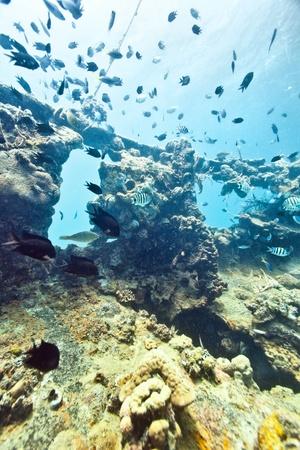 coron: Shipwreck underwater. Sunken gunboat at Lusong Island