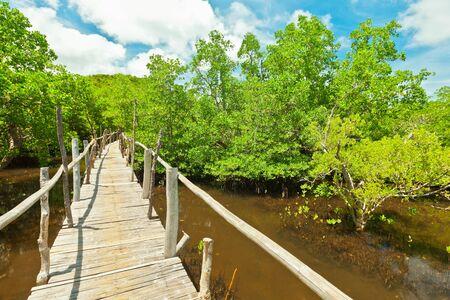 bohol: Wooden bridge among the mangroves. Bohol. Philippines