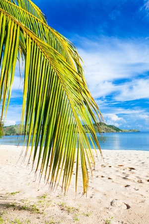 Coconut tree branch on the tropical beach photo