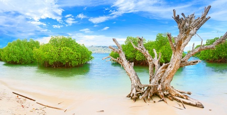 Tropical island panorama. Dry tree on the foreground photo