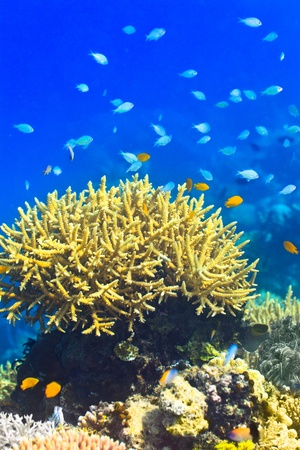 Coral reef underwater with fishes photo
