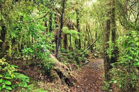 jungle scene: The New Zealand native bush Stock Photo