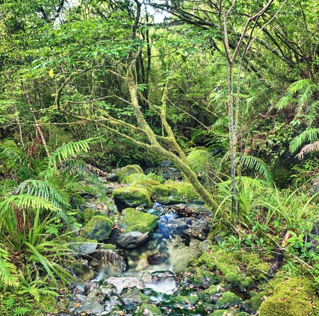 tortuous: The New Zealand native bush Stock Photo