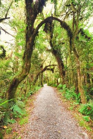 otherworldly: Native bush of New Zealand Stock Photo