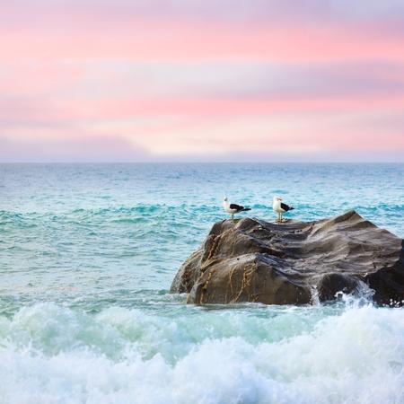 Twee meeuwen op de rots bij zonsondergang Tasman zee Stockfoto
