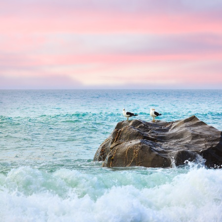 birds scenery: Two seagulls on the rock at sunset  Tasman sea