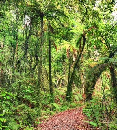 tropical native fern: The New Zealand native bush Stock Photo