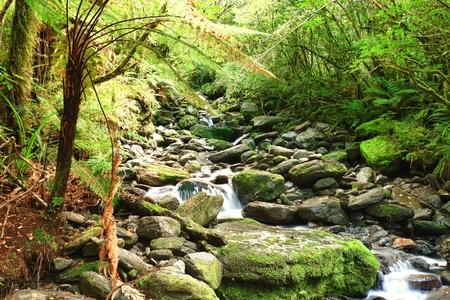 Stream among New Zealand native bush photo