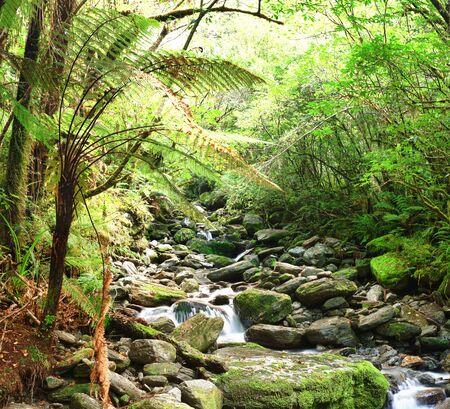 otherworldly: Stream among New Zealand native bush