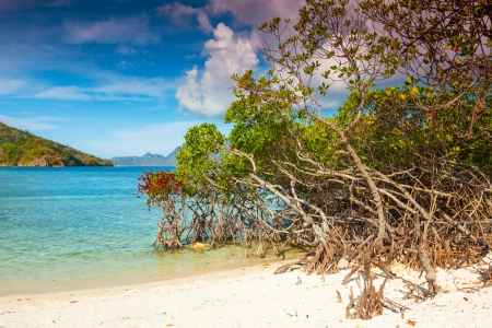 Beautiful beach. Mangroves on the foreground photo