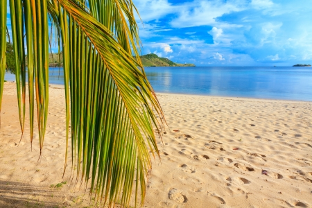 Coconut palm branch on the tropical beach photo