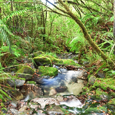 Stream among New Zealand native bush photo