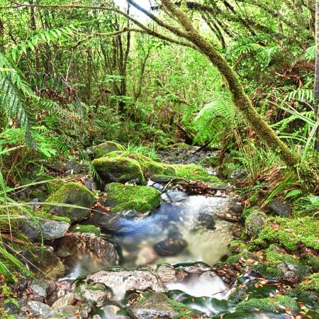 zealand: Stream among New Zealand native bush