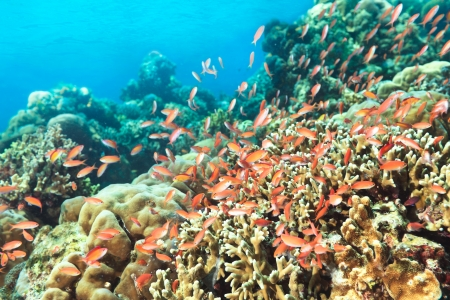Beautiful view of the coral reef with fishes photo