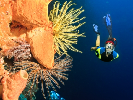 Diver swimming underwater among the coral reef photo