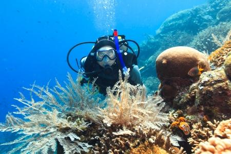Scuba diver underwater close to coral reef photo