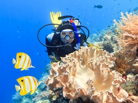 sulawesi: Scuba diver underwater close to coral reef Stock Photo